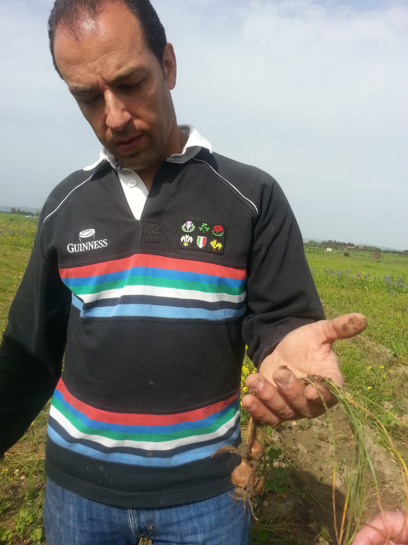 Fausto Caboni holding some crocus corms.
