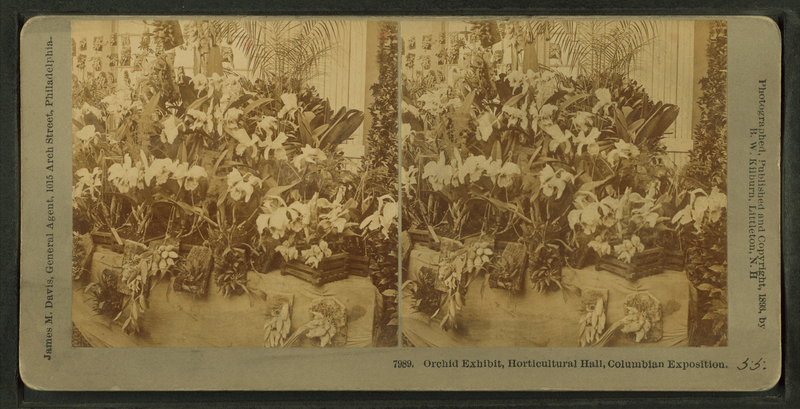 800px-Orchid_exhibit,_Horticultural_Hall,_Columbian_Exposition,_by_Kilburn,_B._W._(Benjamin_West),_1827-1909