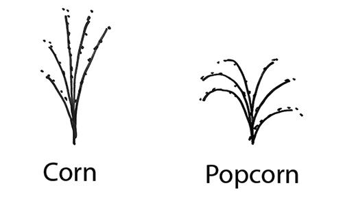 cornpopcorn