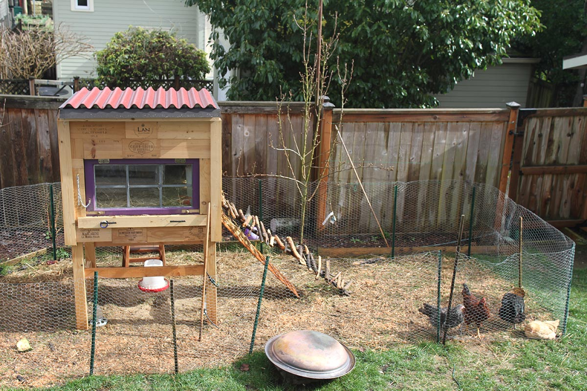 Backyard Chicken Coup raising backyard chickens for dummies - modern farmer