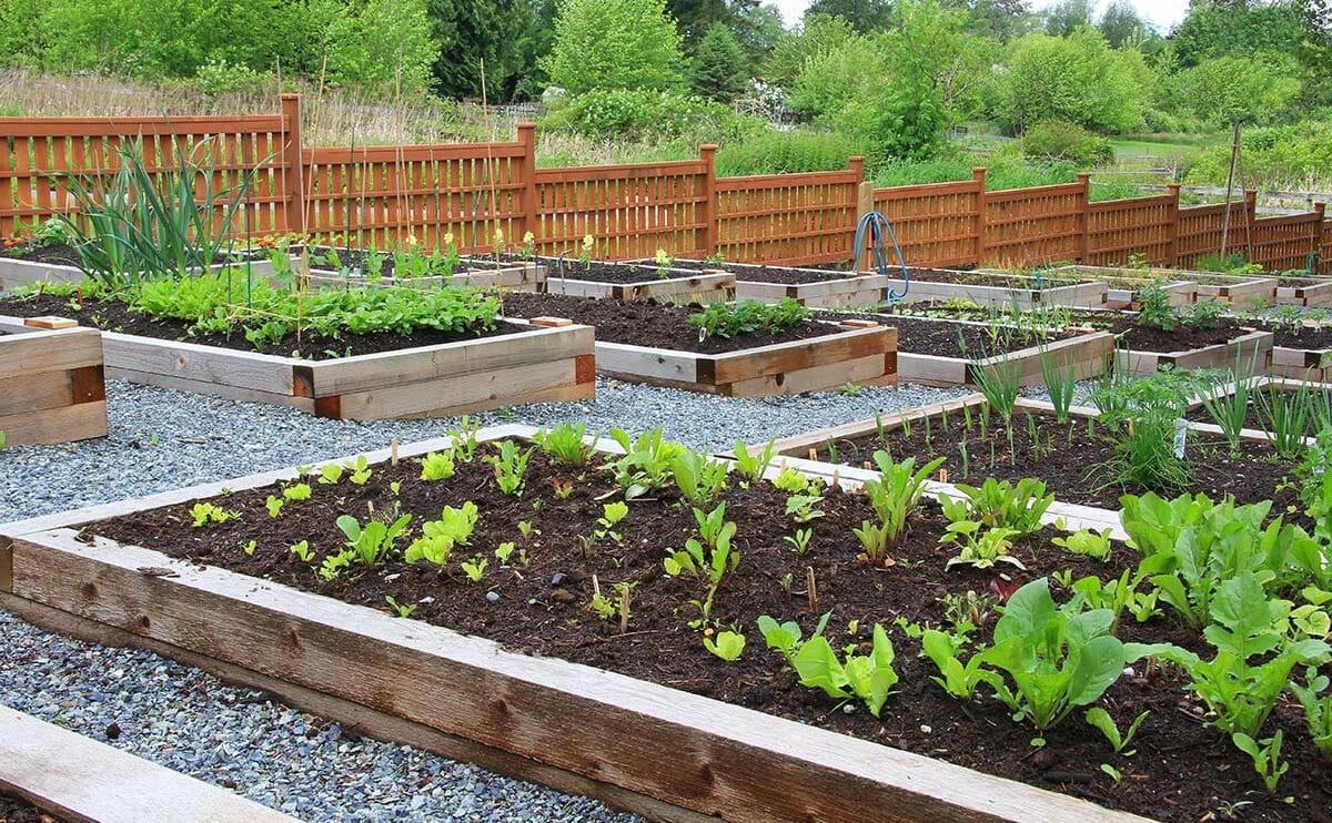 The Hidden Dangers Of Lead In Urban Gardens