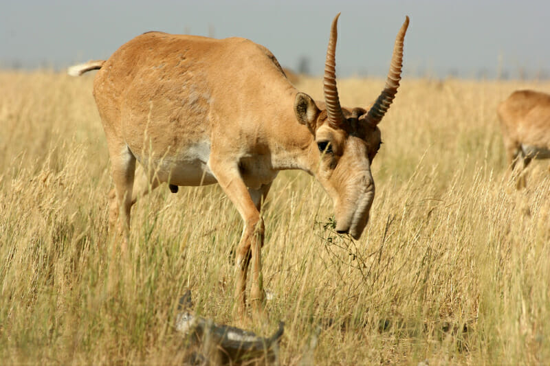 The 10 Best Horns In The Animal World: The Definitive List