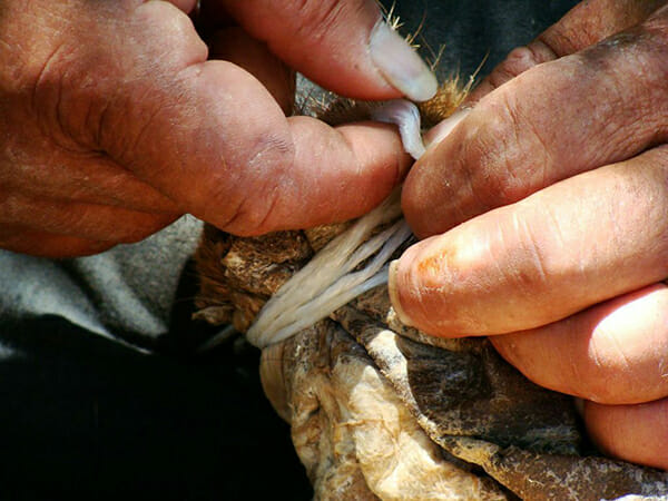 Dimitris Hiotis knots the legs of the touloumi to create a vessel for the aging and storage of touloumotiri.
