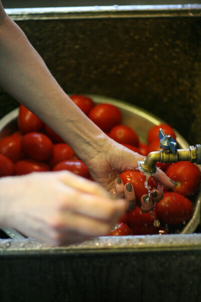 Tomato canning step one: the wash.