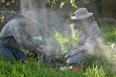 When bees sense smoke, they retreat into the hive, leaving more room for the beekeeper to work.