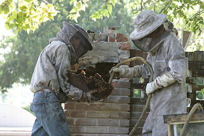 Scott and her son John suction the bees into a temporary home.