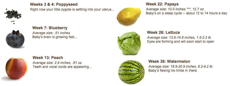 Top Five Baby Growth Week By Week Compared To Fruit - Circus