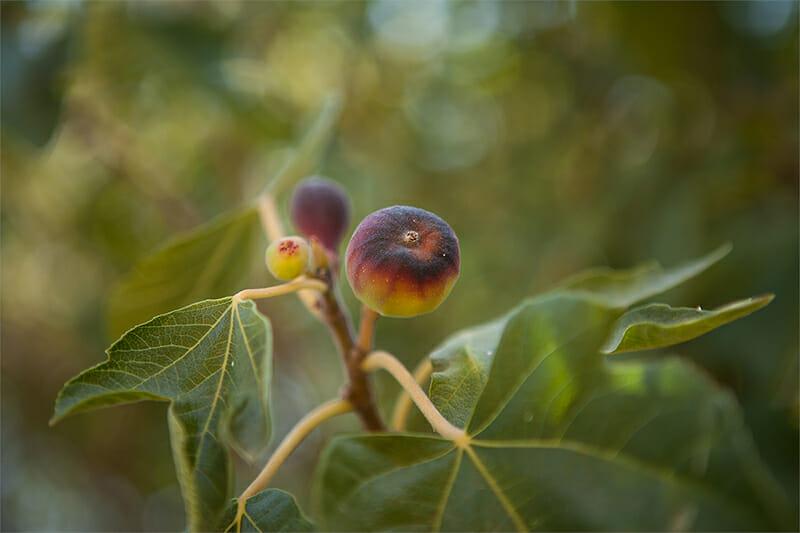 fruitnut12