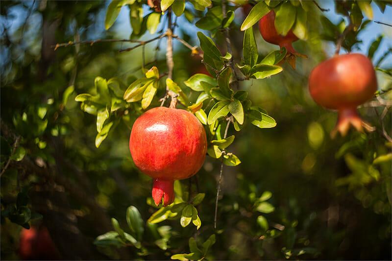 fruitnut7