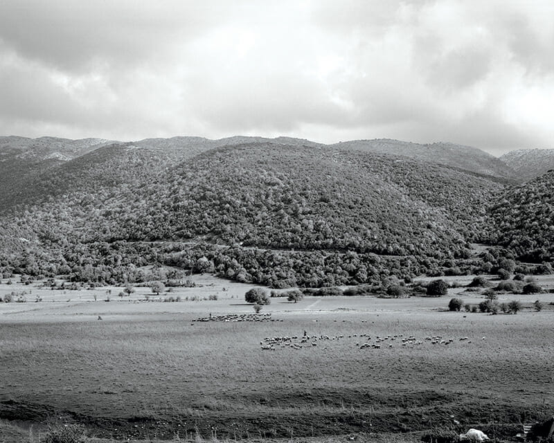 Shepherds and their flock in the Zagori region of northern Greece, close to the village of Ano Pedina.