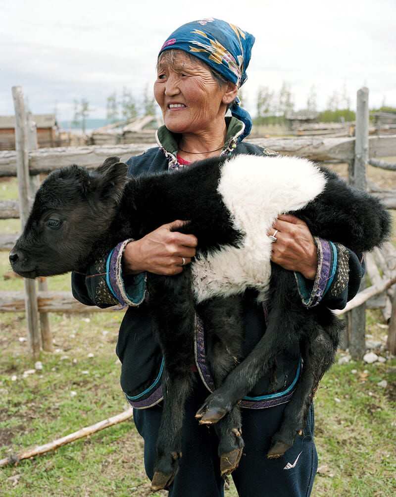 An older woman carrying a baby calf at her home in Khuvsgul, the northernmost province of Mongolia.