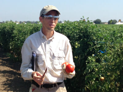 Monsanto tomato breeder, Alan Krivanek.