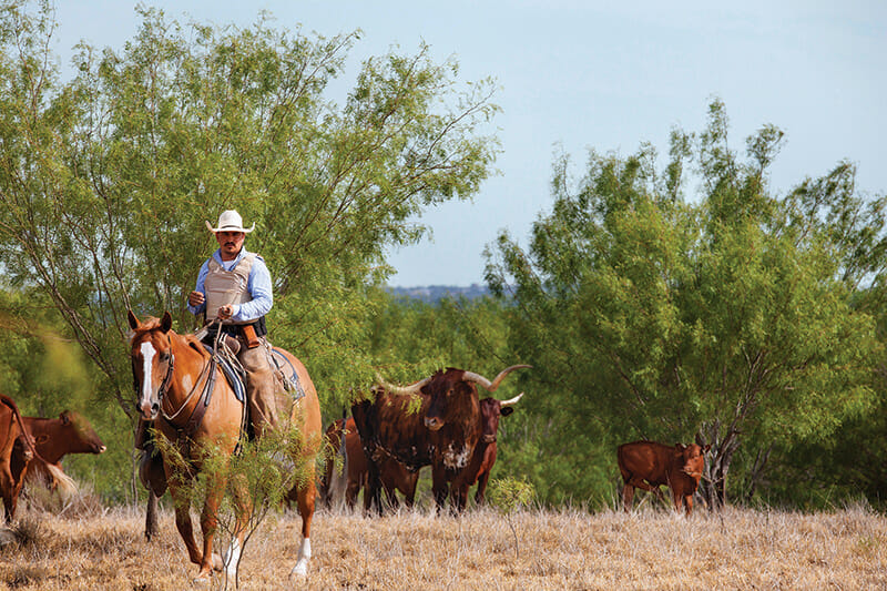 Flores patrols for stray livestock on a private ranch near the Rio Grande outside of Laredo, TX.
