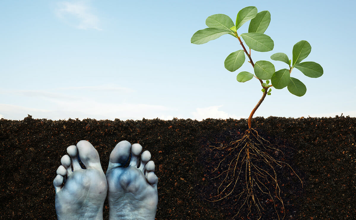 a lesson in graveyard soil science modern farmer