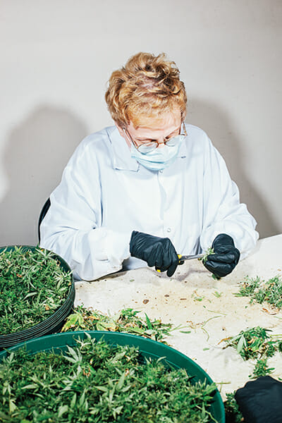 Mary Rotherham, 73, trims pot plants at Nature's Herb.