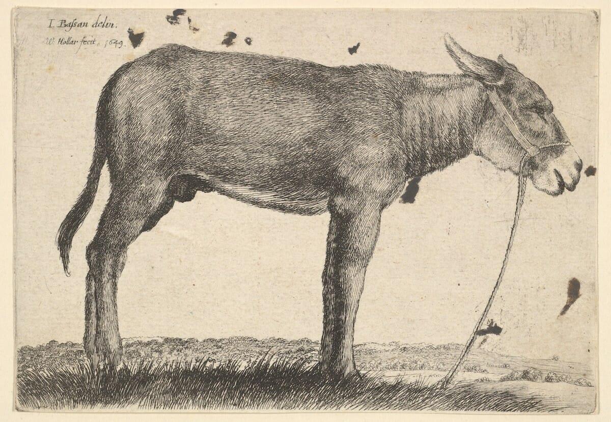 Donkey5.etching