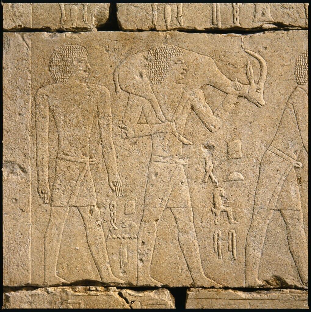 donkey17.tomb
