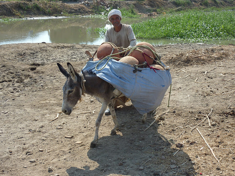 The donkey carries newly fired pots up to a main road. Flickr/ Hannah Pethen.