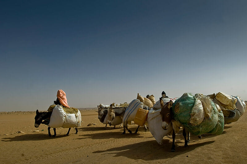 Darfurian refugees from Sudan with  donkeys carrying straw for buildings and animals feeding. / Flickr/ European Commission DG ECHO.