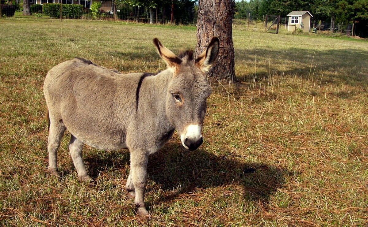 Miniature Donkey Farmer Makes Us Want To Run Out And Get Some Donkeys Right Now