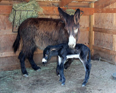 Moose, shortly after being born, with his mother.