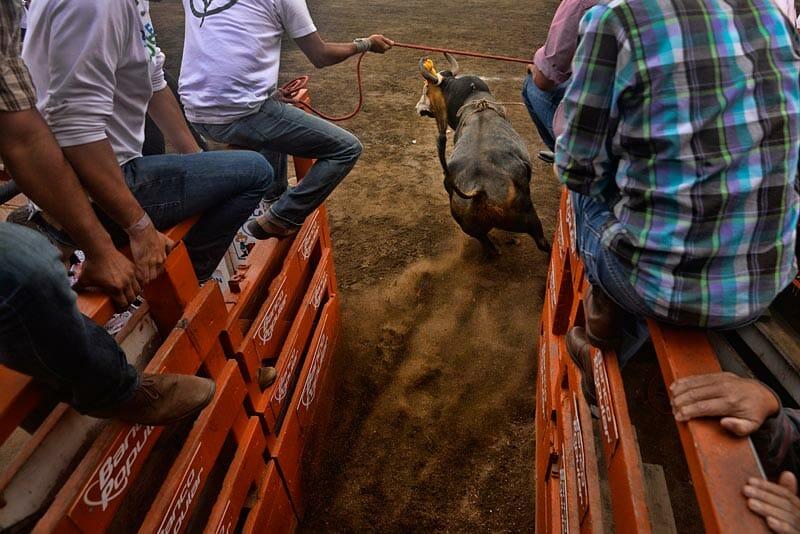 bullfighting_1