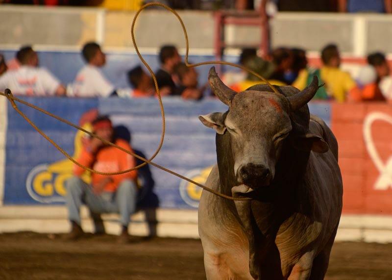 bullfighting_12
