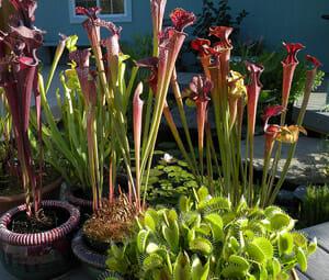 Various Carnivorous Plants