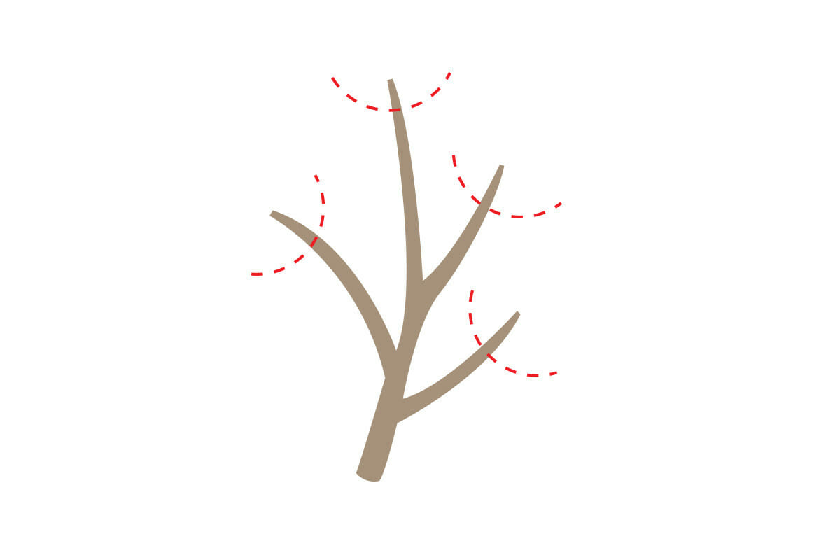 step3_prune