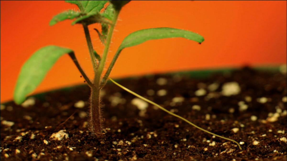 What Plants Talk About - Modern Farmer