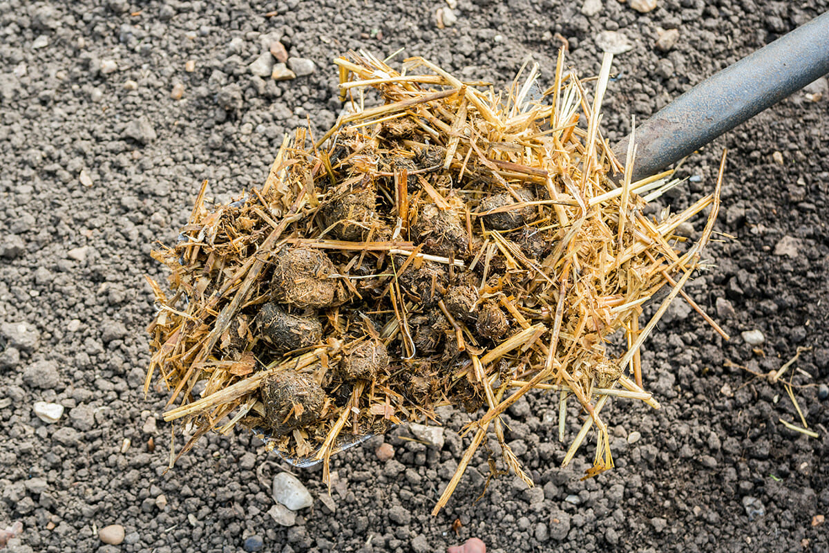 Get a Load of Our Manure Guide - Modern Farmer