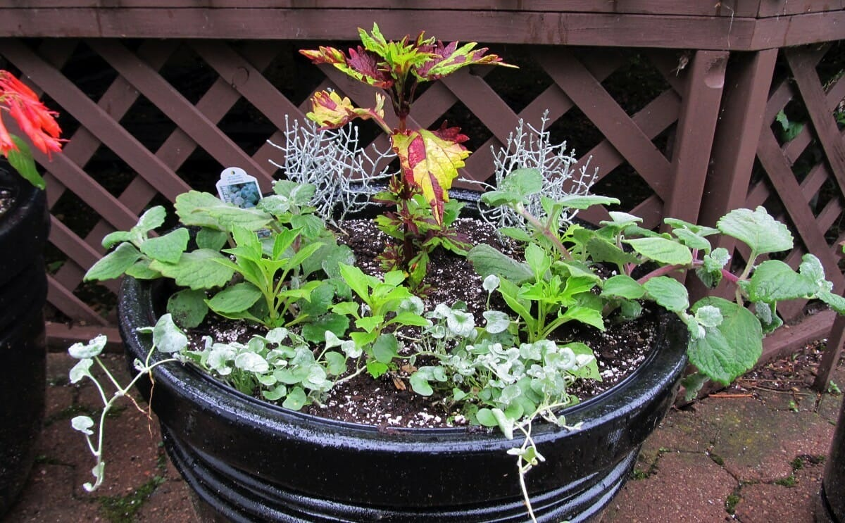 How To Grow Fruits Vegetables And Herbs In A Container Garden Modern Farmer