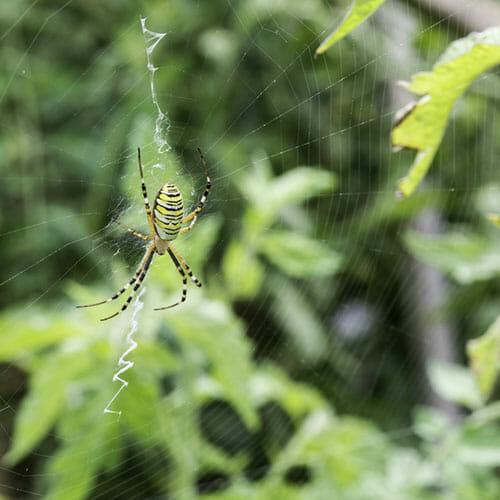http://modernfarmer.com/wp-content/uploads/2015/06/spider.jpg