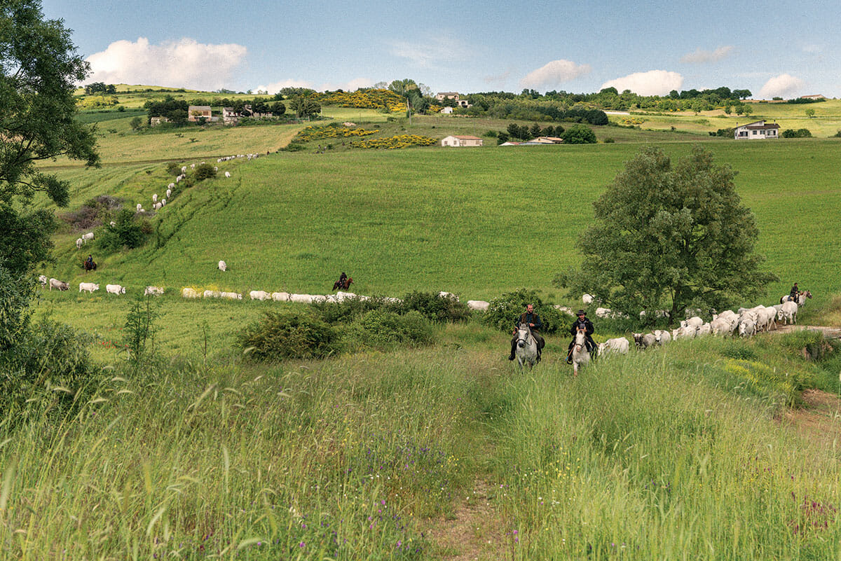 The ancient herding trails, called tratturi, can be 400 feet wide in some places and as narrow as a single cow in others.