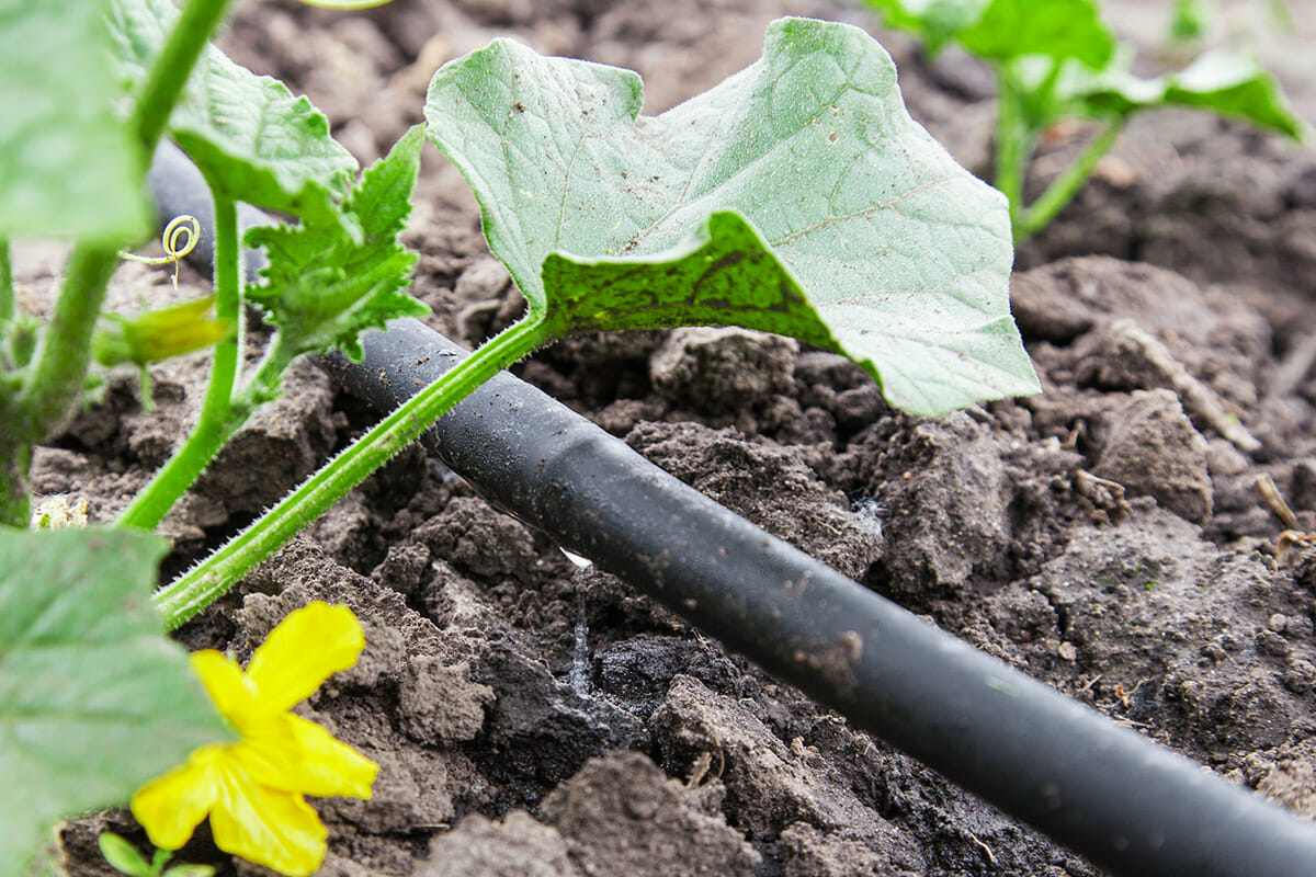 How To Build A Drip Irrigation System Modern Farmer