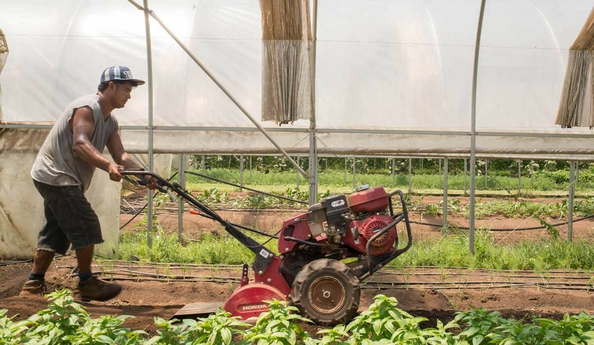 how farmworkers survive heat stress