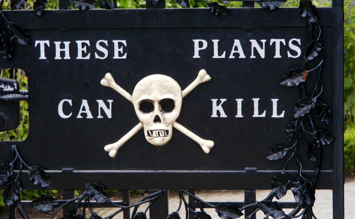 Part Ii More Fruit Of Poisonous Tree >> 6 Secretly Poisonous Plants We Eat All The Time Modern Farmer