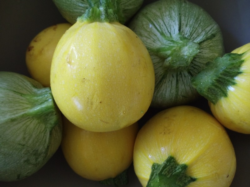 10 Summer Squash Varieties Some You Know Some You Don T Modern Farmer