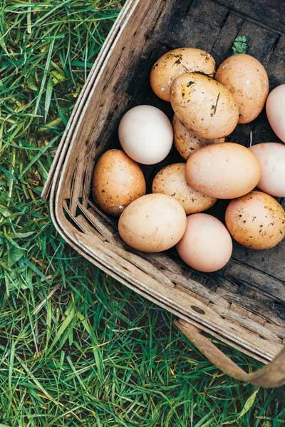 http://modernfarmer.com/wp-content/uploads/2015/08/kurtwood-farms-eggs.jpg