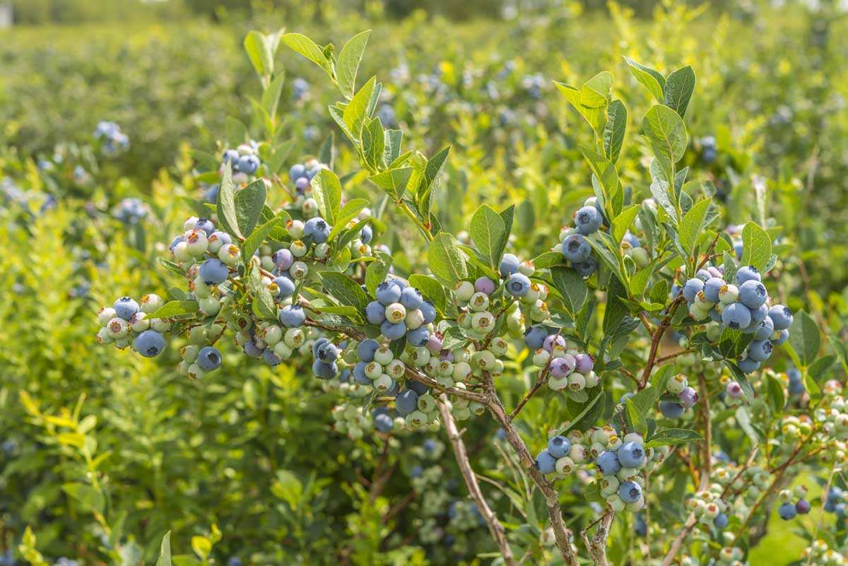 5 Ways To Landscape With Edible Plants This Fall Modern Farmer