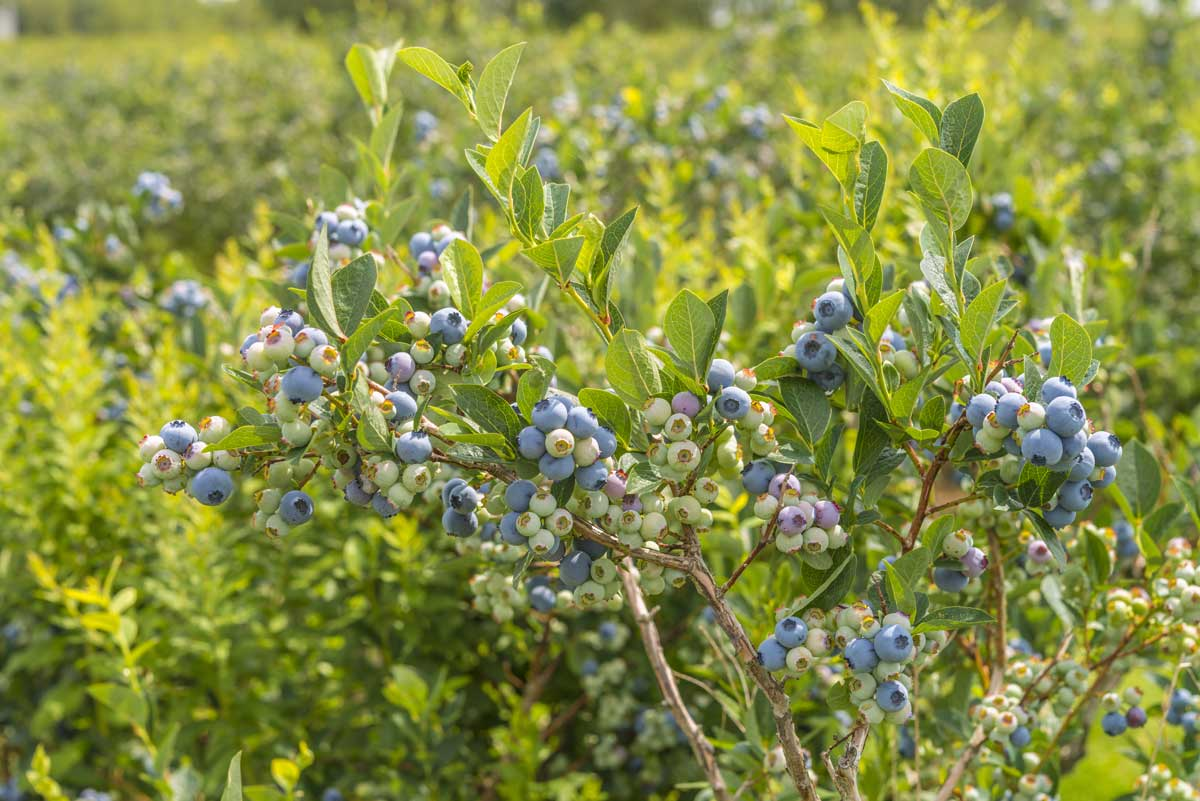 5 Ways To Landscape With Edible Plants This Fall Modern