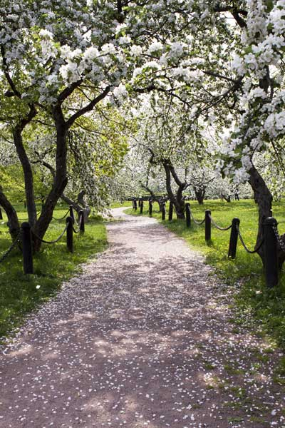edible-landscapes-flowering-trees