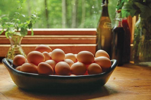 byebrook farm eggs
