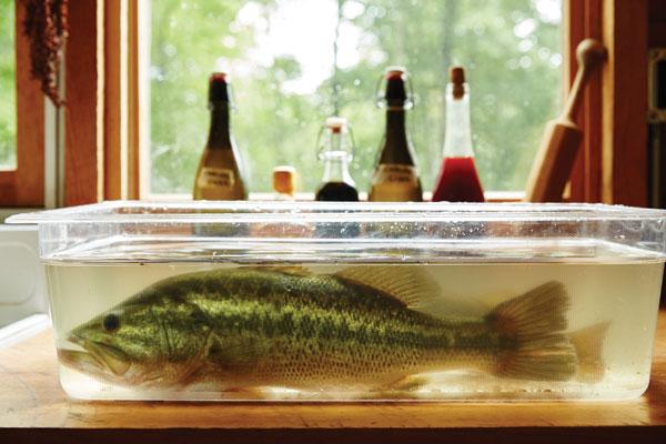 inez-valk-fish