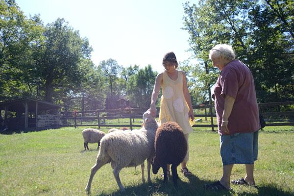 The farm has recently added Finnish sheep.