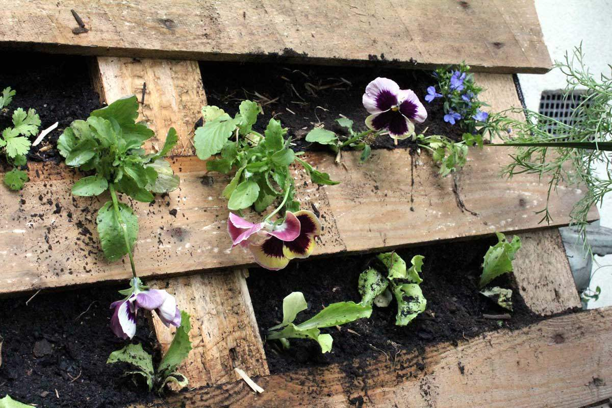 How to Make a Pallet Garden - Modern Farmer