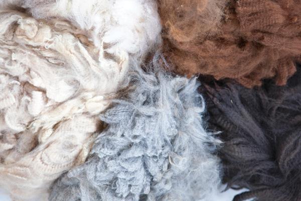 raising-alpacas-fiber
