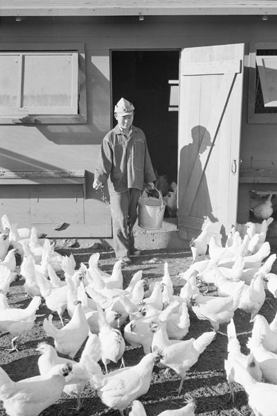 Mori Nakashima scatters chicken feed at the Manzanar Relocation Center, in California's Owens Valley,in 1943. Ansel Adams / LOC