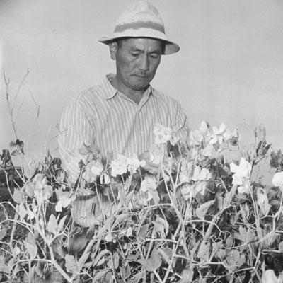 http://modernfarmer.com/wp-content/uploads/2015/10/japanese-americans-flower-nursery.jpg