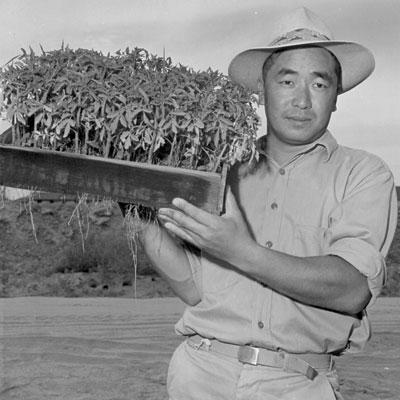 http://modernfarmer.com/wp-content/uploads/2015/10/japanese-americans-tomato-seedlings.jpg